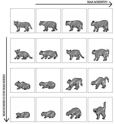 bcd826fe59 El lenguaje corporal de los gatos
