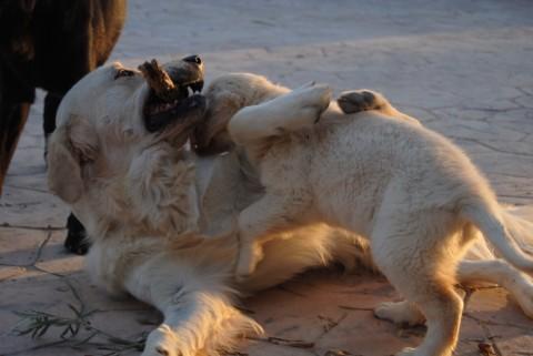 Jordan jugando con cachorro