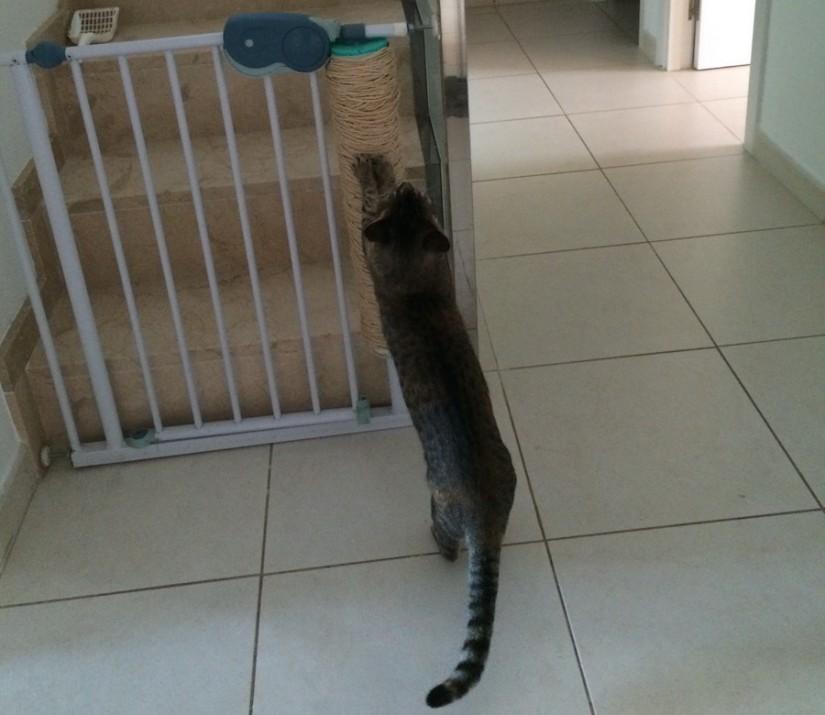Gato rascador