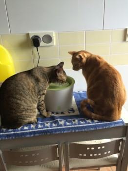Fuente de agua para gatos