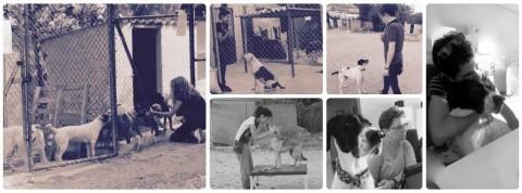 Curso práctico Etología clínica para veterinarios