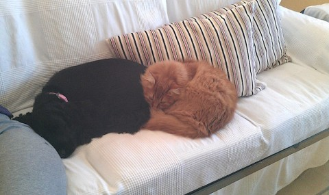 Perro y gato en sofá