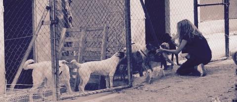 Enriquecimiento ambiental en perros