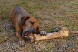 A los perros hay que tocarles la comida mientras comen