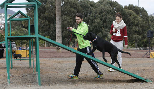 Agility parque canino 4