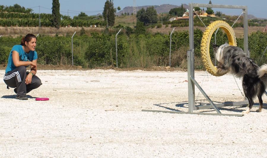 Obstáculos agility rueda