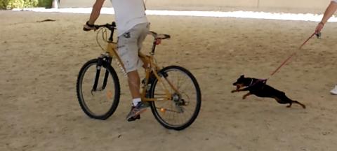 Perro reactivo con bici 2