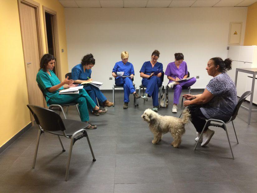 Curso práctico etología clínica para veterinarios mayo 2016