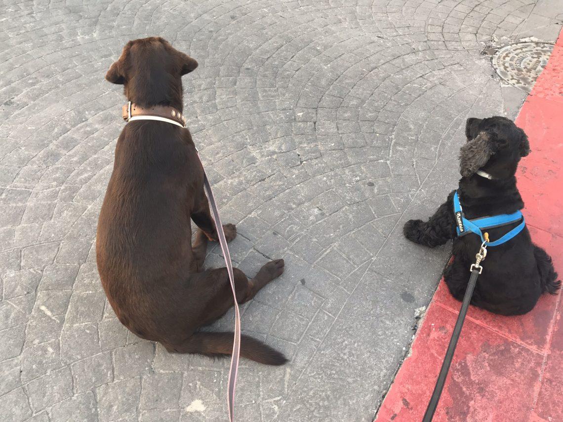 09d9ce760c57 El manejo adecuado de la correa en el perro