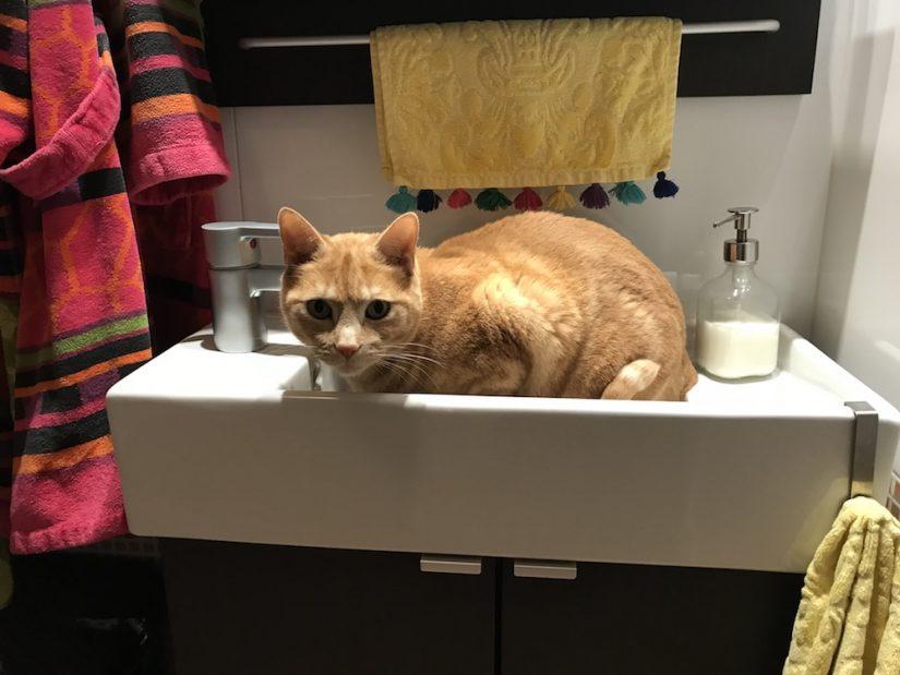 Macarrón el el lavabo