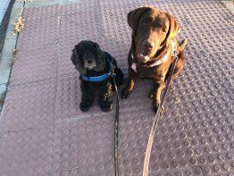 Ava y Greta sentadas paso peatones