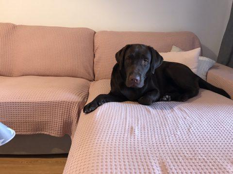 Ava en el sofá