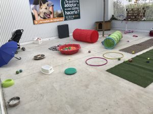 IMG_5046 Puppy party Verdecora 2