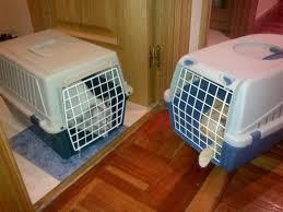 Cuando el gato vuelve a casa del veterinario