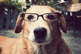 Curso online Educador canino y etología