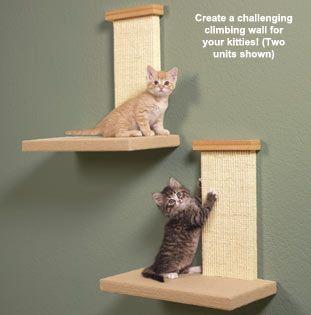 Rascador gatitos