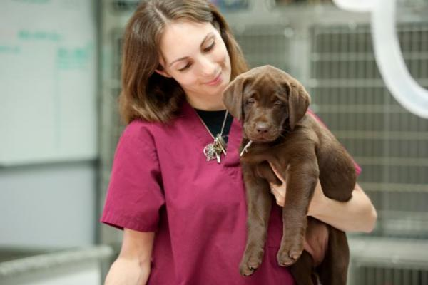 Ciclo formativo para auxiliares técnicos veterinarios