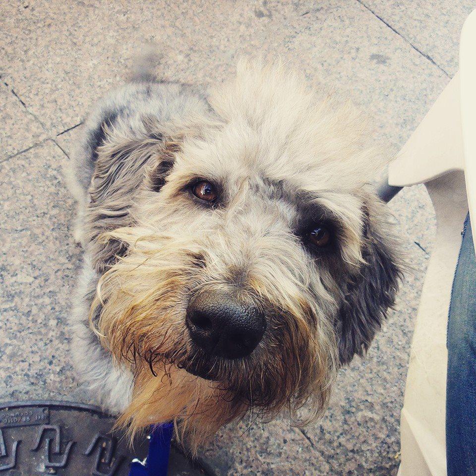 Caso clínico de un perro reactivo