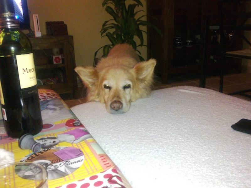 Perro pidiendo en el sofá
