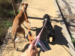15 razones para no castigar a tu perro cuando tira de la correa