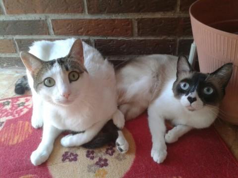 Koke y Kleo, dos gatos