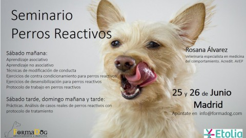 Seminario perros reactivos