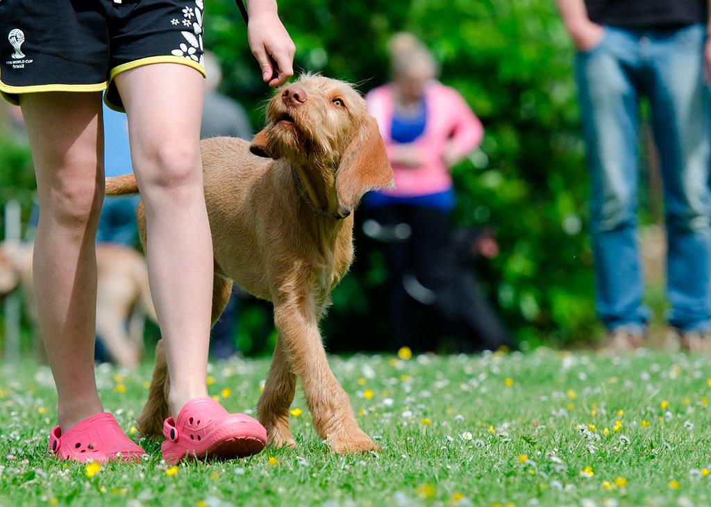 Curso-educacion-etologia-canina