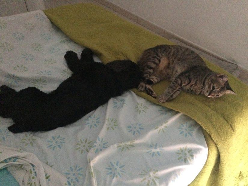 Greta y Jabuguita en la cama