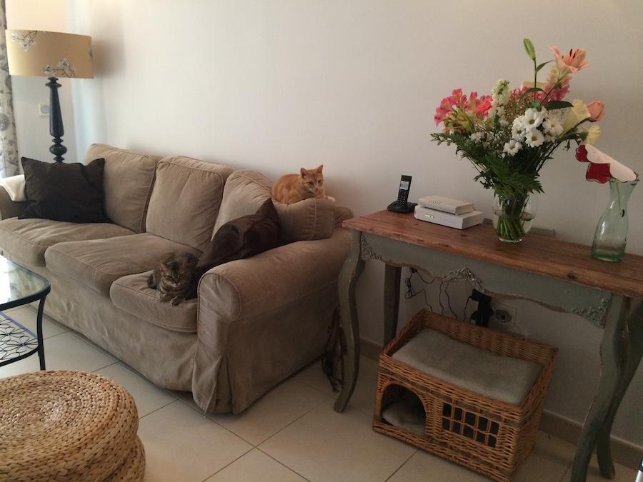 Gatos en el sofá