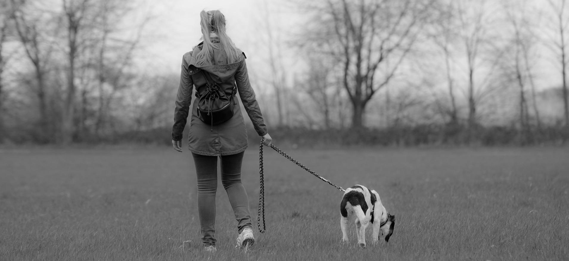Foto perro paseando con correa