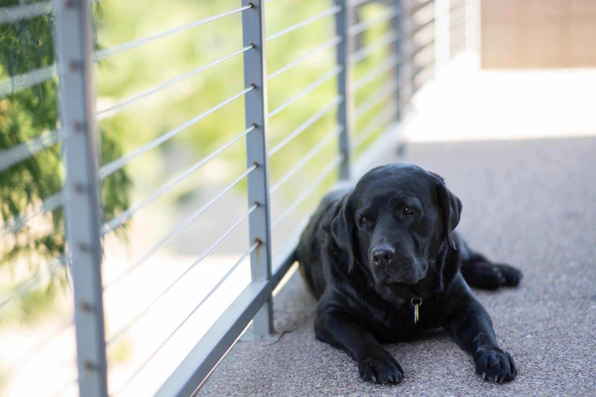 perro en terraza