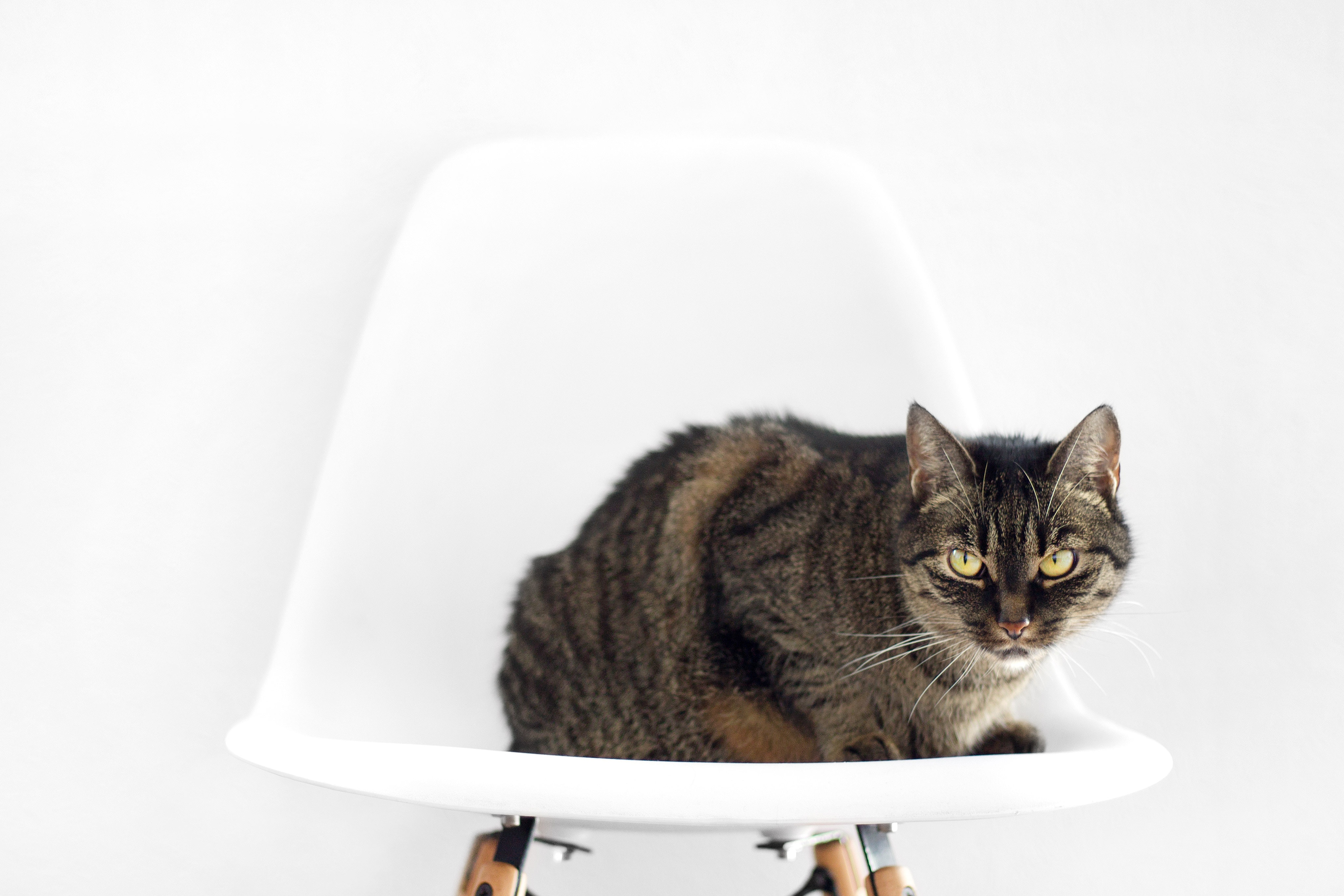 Agresividad en el gato