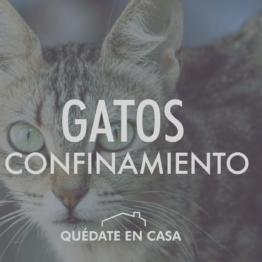Gatos y confinamiento
